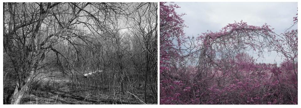 Hua Jin, Double Landscape – Vine #1, 2015, inkjet print, 46 x 70 inches, edition of 5 (left) and Hua Jin, Double Landscape – Vine #2, 2015, inkjet print, 46 x 61 inches, edition of 5 (right)