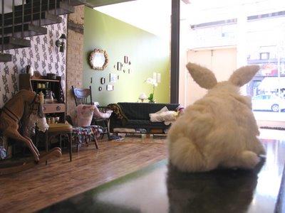 rabbit install