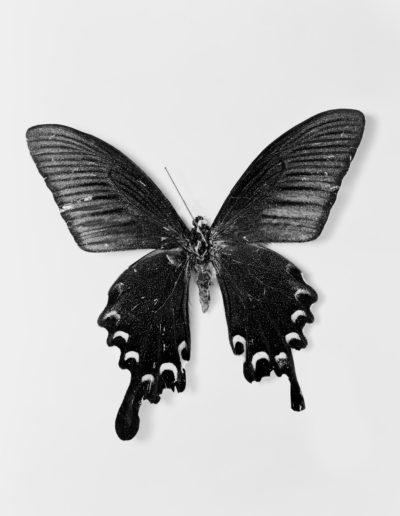 Osheen Harruthoonyan, Flutter II, 2016, split toned gelatin silver print, 13.5 x 19 inches (framed diptych)