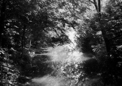 Osheen Harruthoonyan, Forest Fog, 2014, gelatin silver print, 39 x 37.5 inches (framed)