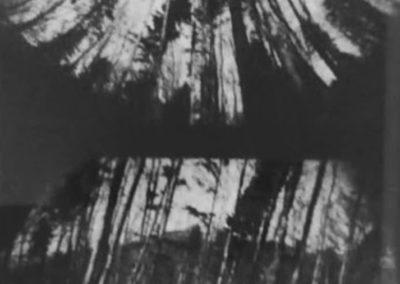 I.Wolf_Tree-No.22_1998_pinhole_17.5-x-15-inches