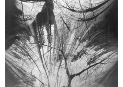 I.Wolf_Tree-No.23_1998_pinhole_17.5-x-15-inches