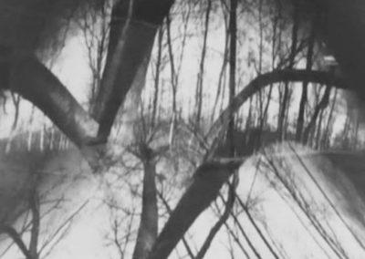 I.Wolf_Tree-No.2_1998_pinhole_21-x-16.5-inches