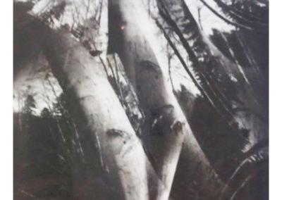 I.Wolf_Tree-No.3_1998_pinhole_21-x-16.5-inches