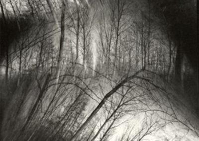 I.Wolf_Tree-No.9_1998_pinhole_21x16.5inches