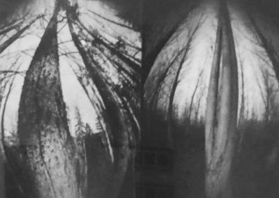 L.Wolf_Tree-No.24_1998_pinhole_15.5-x-16.75inches