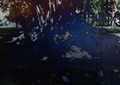 Roots-Radicles_10_web