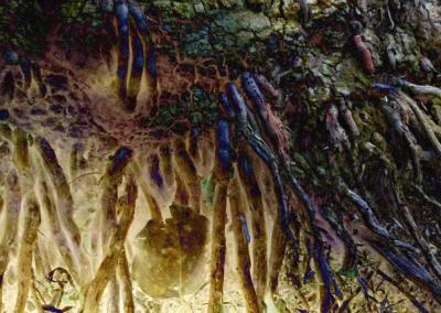 Roots-Radicles_9_web