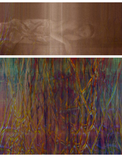 Joan Kaufman, Surface Tension Root Series 1.1, 2015, c-print, 37.75 x 42 inches