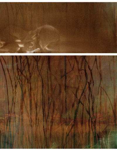 Joan Kaufman, Surface Tension Root Series 1.2, 2015, c-print, 37.75 x 42 inches