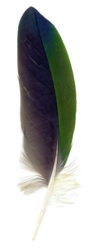 Peggy Taylor Reid, Collected Poems, Parrot Feather, 2007, archival digital print on Washi paper, 36 x 12 inches