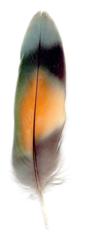 Peggy Taylor Reid, Collected Poems Lovebird Feather, 2006, archival digital print on Washi paper, 39 x 13 inches